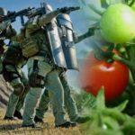 Tomato Raid
